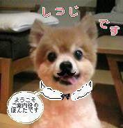 ぽぽんのブログ