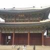 韓国に行ってましたの画像