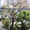 三分咲き2010。の画像