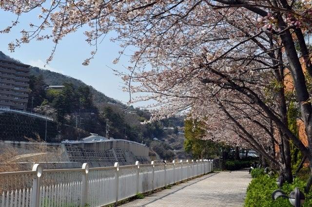 茶々吉とデジ一 のんびり旅-2010/3/27桜並木