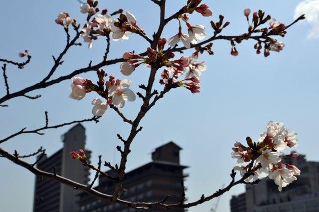 茶々吉とデジ一 のんびり旅-2010/3/27五分咲き