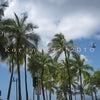 大好きなハワイから帰国しました♪こんな感じの楽しい6日間~。の画像