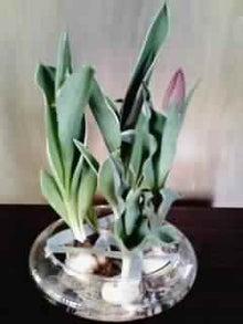 オカメインコのももちゃんと花教室と旅日記-画像0144.jpg