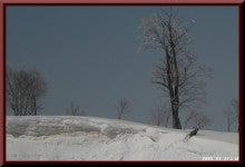 ロフトで綴る山と山スキー-0327_0941