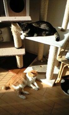 ずれずれブログ…湘南で猫と暮らせば…-100330_0718~0001.jpg