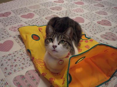くぅちゃんだって猫である。-shaka1