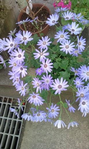 ブレッド&サーカス・ブログAbsolutely Delicious!-blue flower