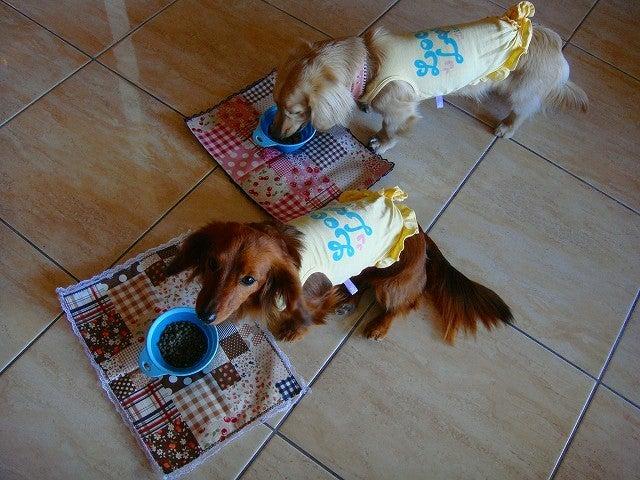 旅犬Lanileaのほほん風船記-カヌチャベイ&ヴィラズの朝