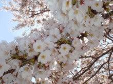 高田明美オフィシャルブログ「Angel Touch」Powered by Ameba-実はこの木だけ