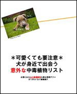 犬の健康を守るためのホームケアを情報発信するOffice Guriニュースレター。