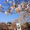 華やぐ松山城の画像
