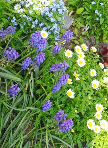 心地よいお庭とおうち *LE PETIT JARDIN ル プチ ジャルダン*-青白の花