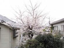 スーパーB級コレクション伝説-さくら1