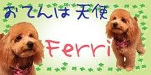 おてんば天使Ferri