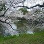 日本一の桜は千鳥ケ淵…