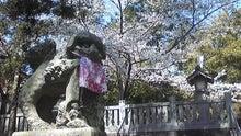 不思議旅行案内 長吉秀夫-狛犬と桜
