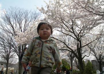 ハイヲピラ学習帳-桜とせがれ