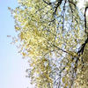 2010/04/06の画像
