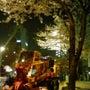 夜桜見てきた。