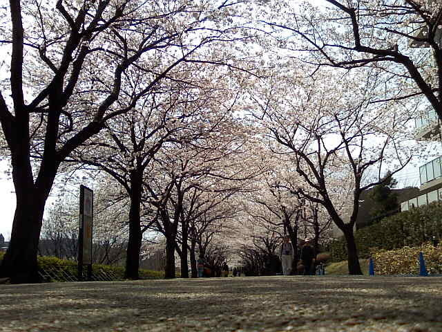 GREEN DAYS  ~緑色な日々~-Image1367.jpg
