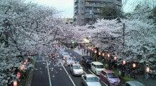 東京・小平市の行政書士ブログ-中野通りの桜並木