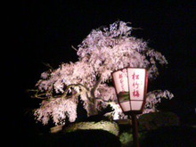 shima.blog2-20100409000412.jpg