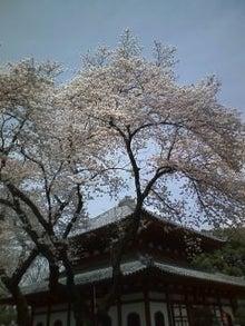 遊印人力車 章太郎の足利情報-100409_1013~01.jpg