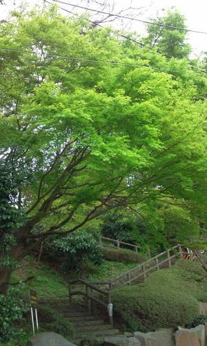 ブレッド&サーカス・ブログAbsolutely Delicious!-green