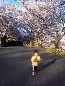 はやはや日記-桜並木