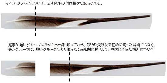 ツバメブログ-尾羽の切り方