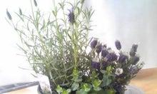 アロマセラピー物語 ●植物からのメッセージ~香りとの対話● ロコログ