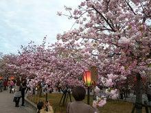 大阪造幣局~~桜の通り抜け2010...