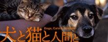 J.L.C Jack Russell Terrier loving club