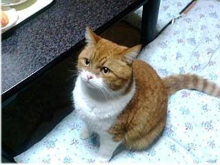 クレイアートでつくる猫 nekonoのブログ-茶白の猫さん
