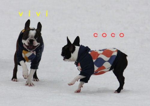 cocoはvivi ん場