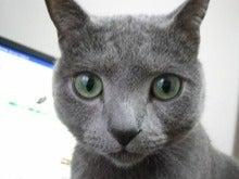 クレイアートでつくる猫 nekonoのブログ-ロシアンブルーの猫ちゃん