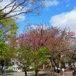 やっぱり春♪