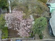 湯島 だらだら日記-20100420091746.jpg