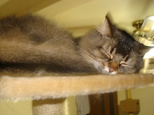 おやぢと風鈴の猫日記