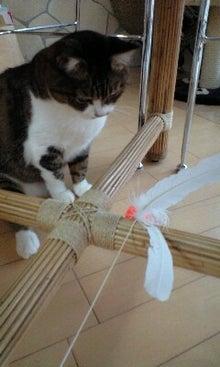 ずれずれブログ…湘南で猫と暮らせば…-100423_0834~0001.jpg