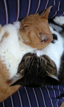 ずれずれブログ…湘南で猫と暮らせば…-100423_1430~0001.jpg