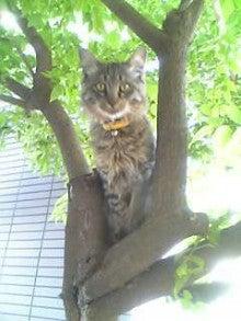 ロロ 猫 やまねこ と