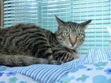 ちび家の猫徒然日記☆彡-ほかげちゃん