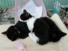 ちび家の猫徒然日記☆彡-ハッピーブラザーズ1