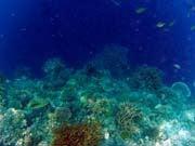 バリ島 くらげのjalan-jalan-海景4