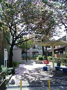 PAOのブログ-八重桜風景