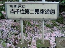 PAOのブログ-八重桜3