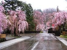 夫婦世界旅行-妻編-角館の桜