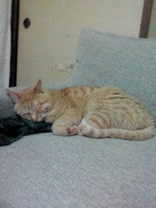 猫がやってきた!!-NEC_0360.jpg