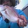 一つテンヤマダイ午後釣りの画像